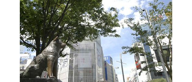 ena国際部 渋谷